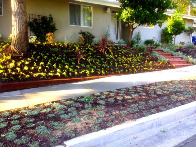 Drought-tolerant designs