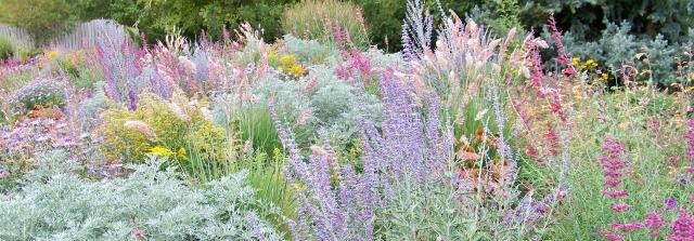 waterwise garden perennials 08